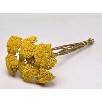 Achillea parker geel gedroogd