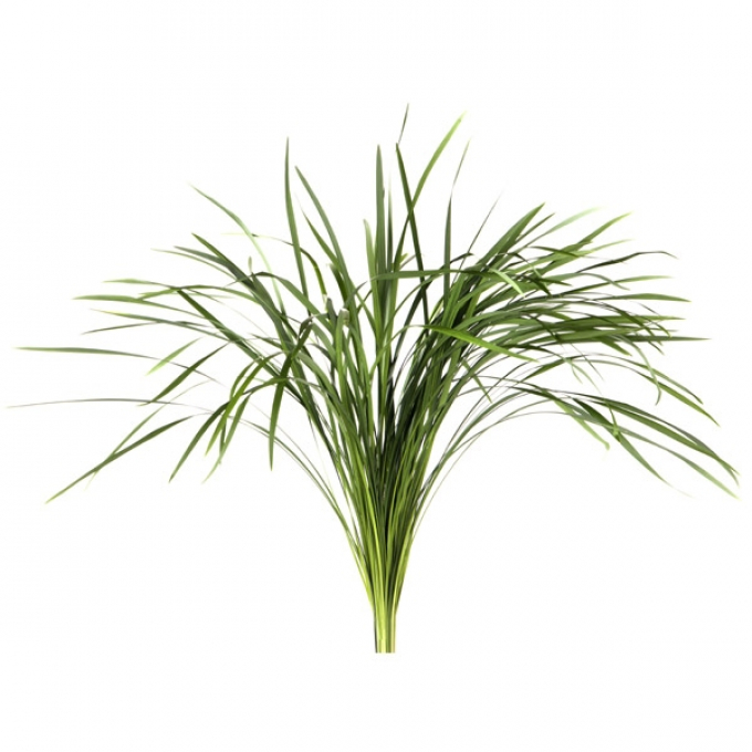Bos T grass