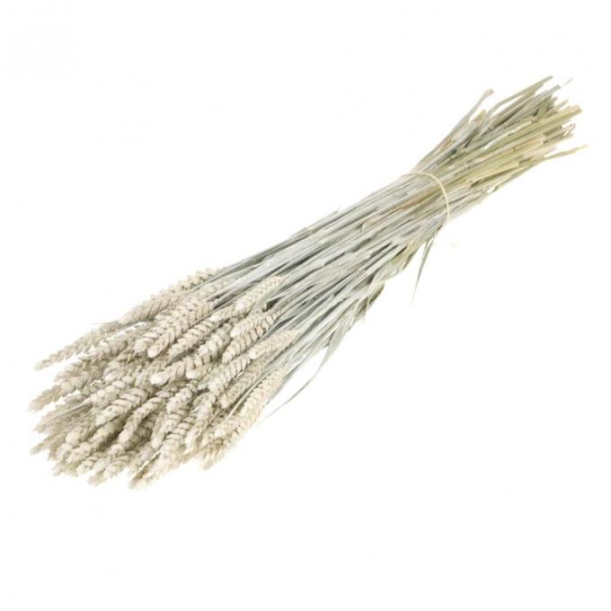 Gedroogde witte Tarwe