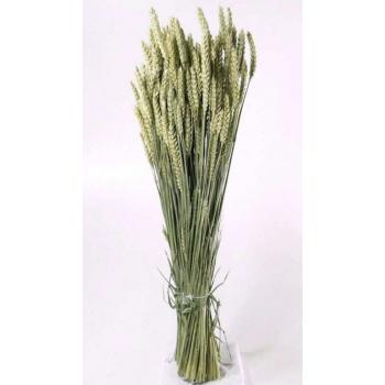 Tarwe naturel gedroogd (Triticum)