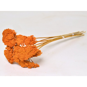 Achillea parker gedroogd oranje geverfd