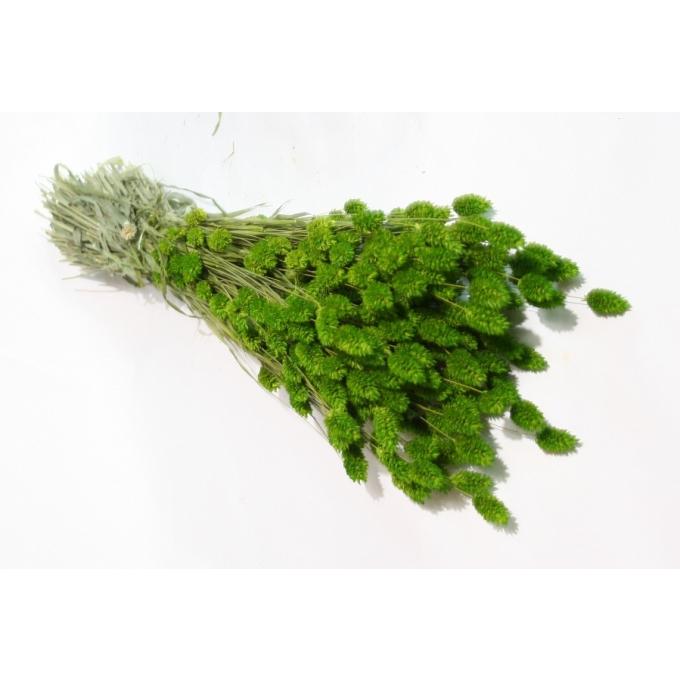 Phalaris gedroogd gekleurd lente groen