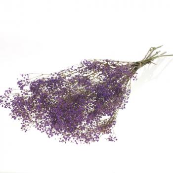 Gypsophile lila geconserveerd gedroogd