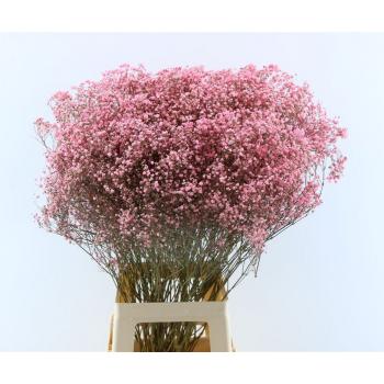 Gypsophila roze geverfd gedroogd per 5 takken