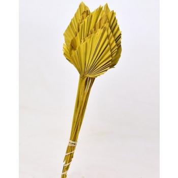 Palm Speer geel