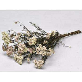 Rice Flower 60 cm