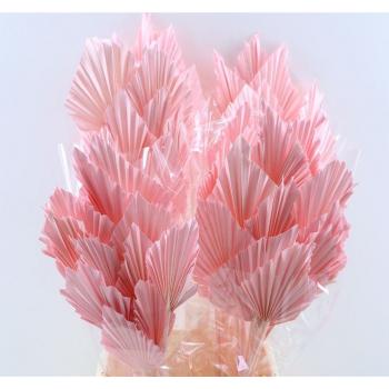Palm Speer licht roze