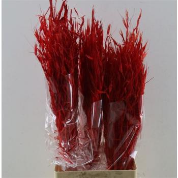 Haver Avena Salvaje gebleekt rood gedroogd