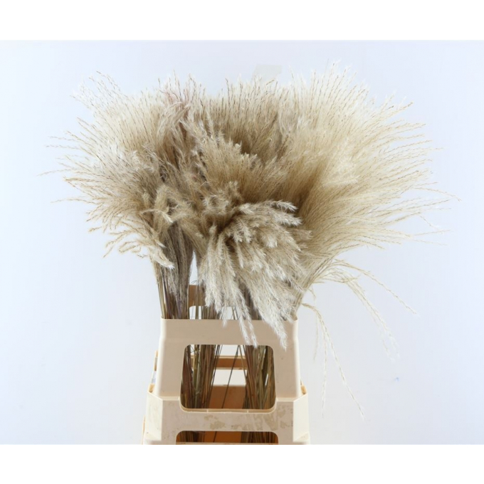 Fluffy reed gras naturel