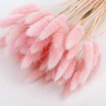 Lagurus Ovatus gebleekt licht roze gedroogd