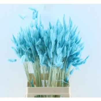 Lagurus Ovatus gebleekt licht blauw gedroogd