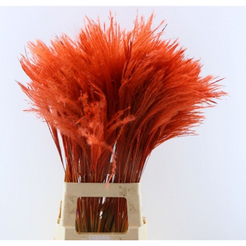 Fluffy reed gras rood