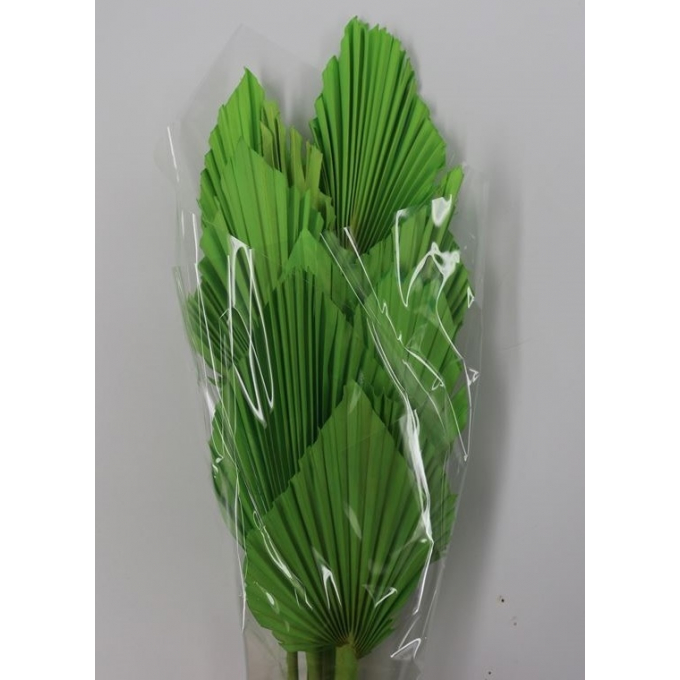 Palm Speer groen