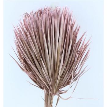 Chamaerops bladeren large licht roze gedroogd