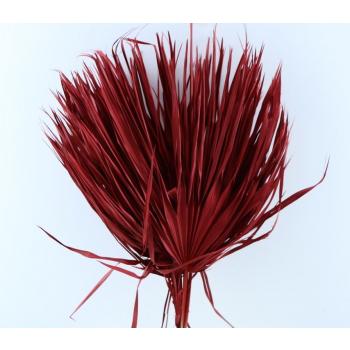 Chamaerops bladeren large rood gedroogd
