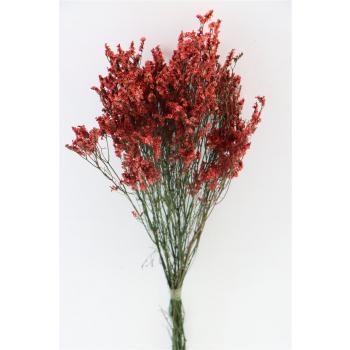 Limonium Diamond coral red gedroogd