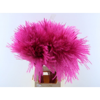 Fluffy reed gras cerise