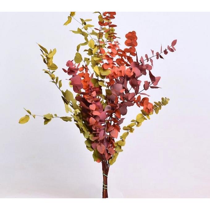 Eucalyptus Stuartiana mix gepreserveerd