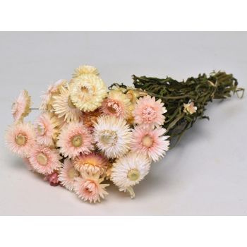 Helichrysum wit roze gedroogd