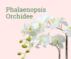 Orchidee bestellen