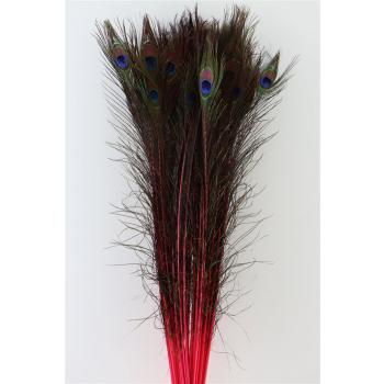Pauwenveren rood lang