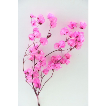 Bougainvillea donker roze