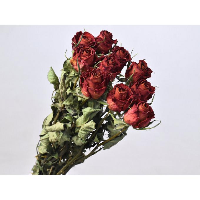 Gedroogde rode rozen