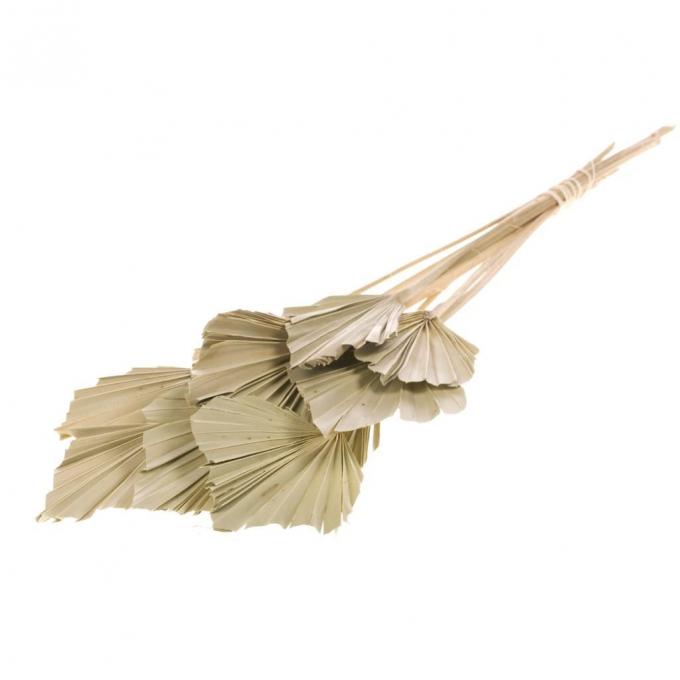Palm spear mini Naturel