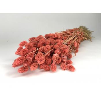 Phalaris gedroogd gekleurd licht roze