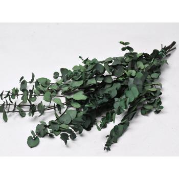 Eucalyptus Stuartiana gepreserveerd